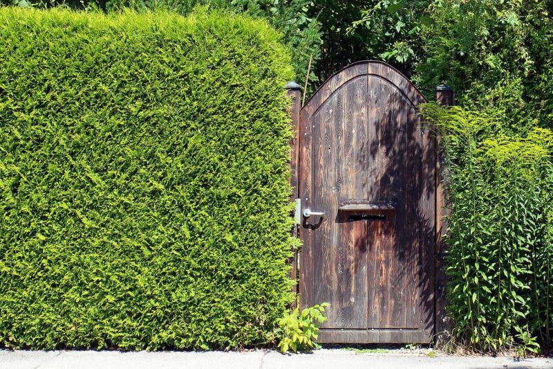 Koniferen Kaufen Garten Busch Hecke