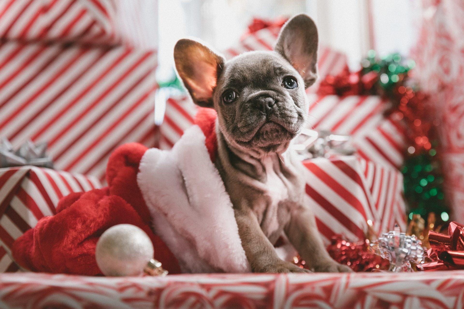 Lustige Weihnachtskarten Bestellen Kaufen Weihnachtspostkarten