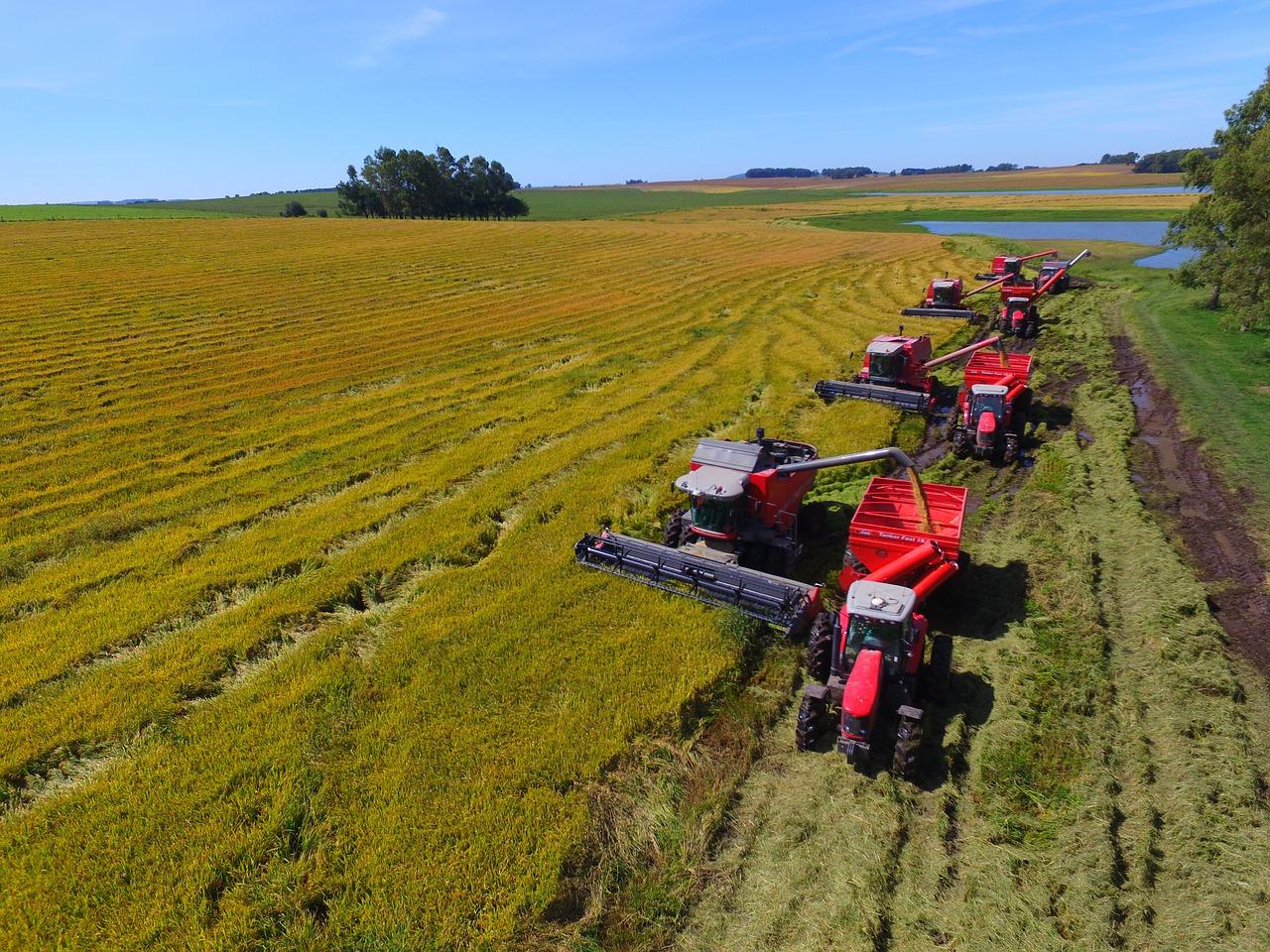massey-traktoren-ferguson-ackerbau-lamma